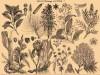 В память о Великой войне: растения для выживания